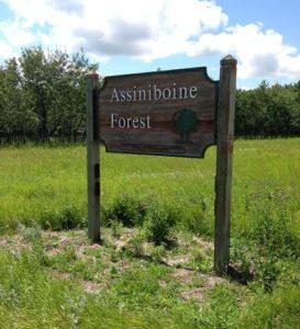 assiniboineforest